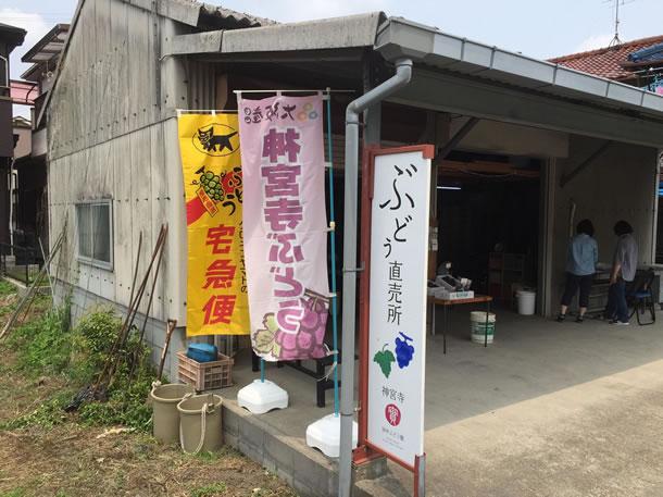 今日の田中ぶどう園直売所