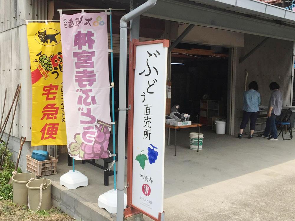 田中ぶどう園直売所看板と神宮寺ぶどうののぼり