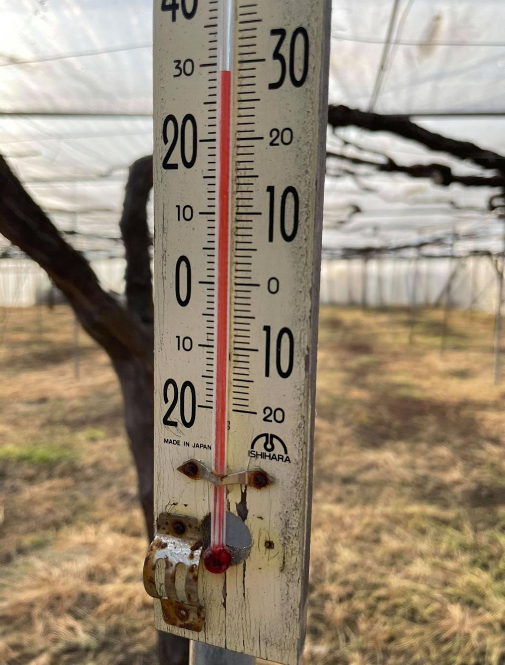 午後4時前でもハウス内は摂氏28度!