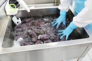 3.酸性電解水で果実を殺菌・洗浄